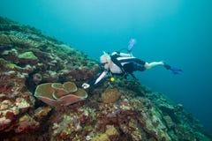 person född under en baby boomkålkorall undervattens- fiji Arkivfoto