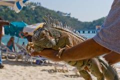 person för strandholdingleguan Royaltyfri Foto