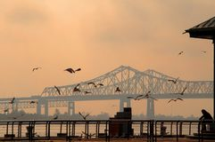 Person Feeding Seagulls perto da ponte da baía de San Francisco-Oakland em Califórnia, América Foto de Stock Royalty Free