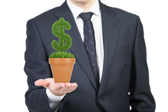 A person in formal suit holds a flowerpot with grass green dollar sign. royalty free stock images