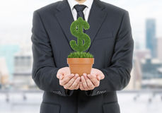 A person in formal suit holds a flowerpot with grass green dollar sign. Stock Image