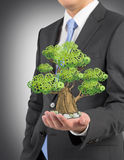 A person in formal suit holds a sketched tree on the palm. Light grey background. A concept of the business development Royalty Free Stock Photo
