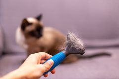 Person with fur comb for cat in hand. Hair of the cat on the brush stock photography