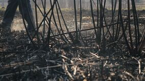 Person in galoshes walks on burnt grass and tree branches after a serious fire in sunny spring weather, a view from a