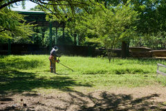 Person gardening. Scenic view of person weeding overgrown lawn in garden Royalty Free Stock Photo