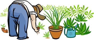 Person Gardening. Vector illustration of a large person planting seedlings in a garden Royalty Free Stock Photos