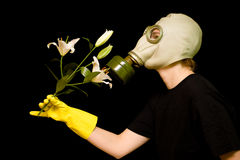 Person in a gas mask smells a flower. Person in a gas mask smells a white flower isolated against black background Royalty Free Stock Image