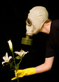 Person in a gas mask smells a flower. Person in a gas mask smells a white flower isolated against black background Royalty Free Stock Images