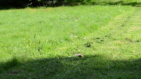 Person grass lawn mower Royalty Free Stock Photo