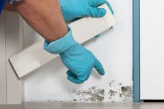Person Hand Cleaning Moldy Wall fotografia stock