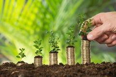 Person Hand Holding Small Plant auf Staplungsmünzen Lizenzfreies Stockfoto