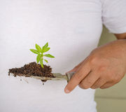 Person Hand Planting Small Tree Stockbild