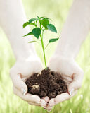 Person hands holding young plant Stock Photo