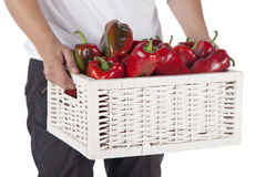 Person hold red bell peppers in a wooden wicker basket. On white background Royalty Free Stock Images
