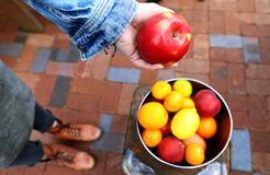 Person Holding Apple Fruit Stock Photo