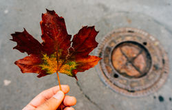 Person holding autumn leaf Royalty Free Stock Photography