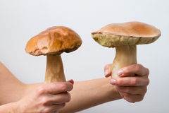Person holding big mushrooms Royalty Free Stock Image