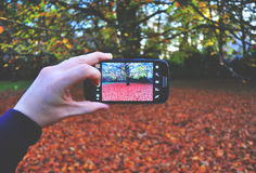 Person Holding Black Android Smartphone Taking Picture on Tree during Day Time Stock Image