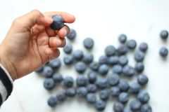 Person Holding Blueberry Royalty Free Stock Image