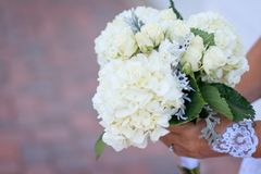 Person Holding Bouquet of White Petaled Flowers Royalty Free Stock Image