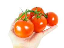 Person holding a bunch of tomatoes Royalty Free Stock Photography