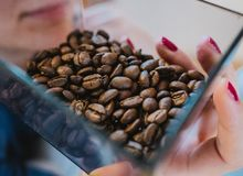 Person Holding Coffee Beans on Glass Bowl Stock Photography