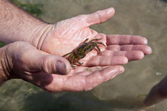 Person holding crab in hands Royalty Free Stock Images