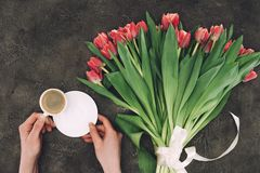 Person holding cup of coffee with saucer and beautiful tulip flowers. Partial top view of person holding cup of coffee with saucer and beautiful tulip flowers Royalty Free Stock Image