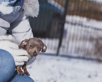 Person holding dog during winter royalty free stock images