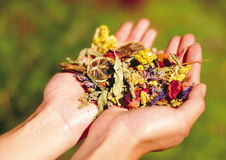 A person holding dried flowers Stock Images
