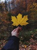 Person Holding Dried Maple Leaf royalty free stock photography