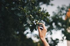 Person Holding Green Leafed Tree stock photo