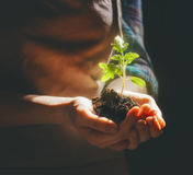 Person holding green sprout. Concept of generation and development. Person is holding in hands green sprout. Spring, nature, eco and care royalty free stock photo