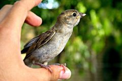 Person Holding Grey Bird Royalty Free Stock Photography