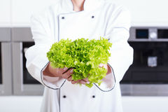 Person holding lettuce royalty free stock photography