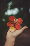 Person Holding Red Petaled Flower Stock Images