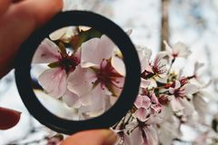 Person Holding Round Black Ring Through Pink Petaled Flowers Royalty Free Stock Photo