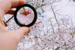 Person Holding Round Framed Mirror Near Tree at Daytime Royalty Free Stock Photography