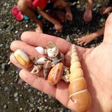 A person holding seashells. Royalty Free Stock Images