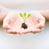 Holding a small plant in hands Stock Images