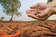 Person holding  small plant   Stock Image