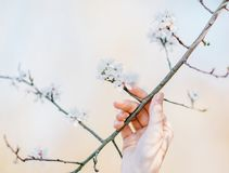 Person Holding the Stem of White Petaled Flower at Daytime Royalty Free Stock Photo