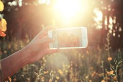 Person Holding White Android Smartphone While Taking Self Photo Near in Yellow Flower during Daytime Stock Photography