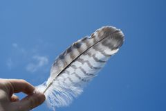 Person Holding White and Gray Feather Under Blue Sky Stock Photo