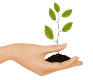 Person holding a young plant. Business concept. Royalty Free Stock Image