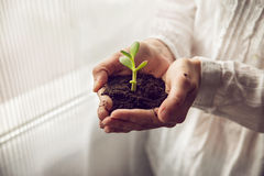 Person holding a young plant at home Stock Photo