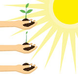 Person holding a young plant under the sun. Stock Images