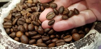 A person holds on hand palm roasted coffee beans close up in stone bowl stock images
