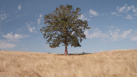 Person Hugging Tree on Barren Landscape Stock Photos