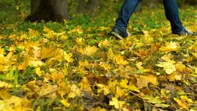 Person walks on autumn leaves. Person in jeans walks on autumn leaves stock video